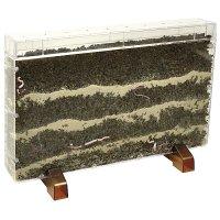 Κουτί Παρατήρησης Φυτών Eduplay 150083